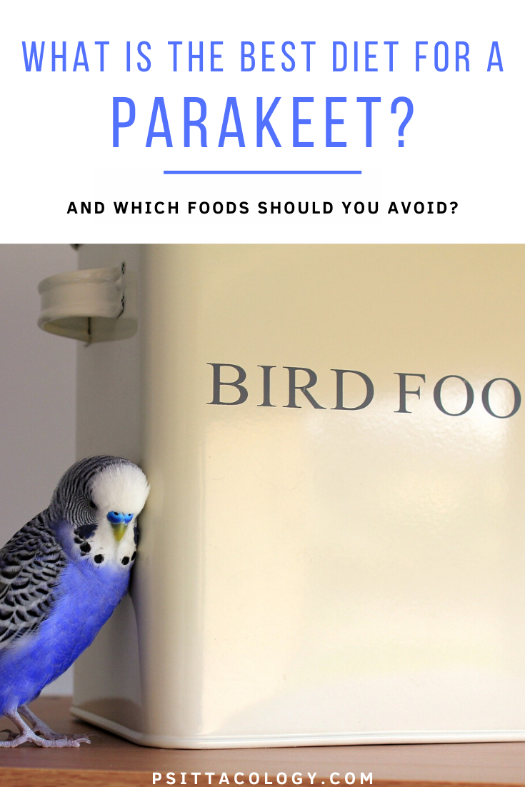 Blue budgie parrot leaning against a container labeled 'bird food'. | Guide on what parakeets eat