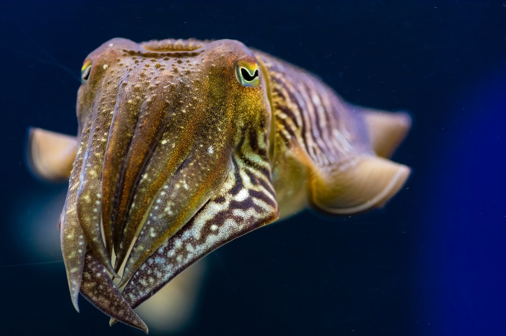 Close-up of cuttlefish | Article about cuttlebone and its uses for parrots