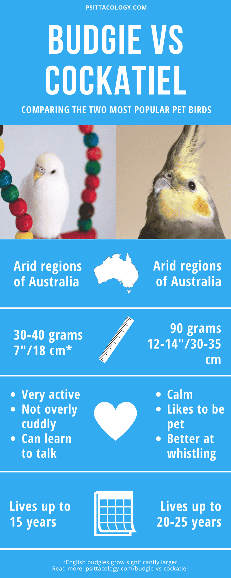 Infographic comparing budgies and cockatiels | Budgie vs cockatiel: Find the bird for you