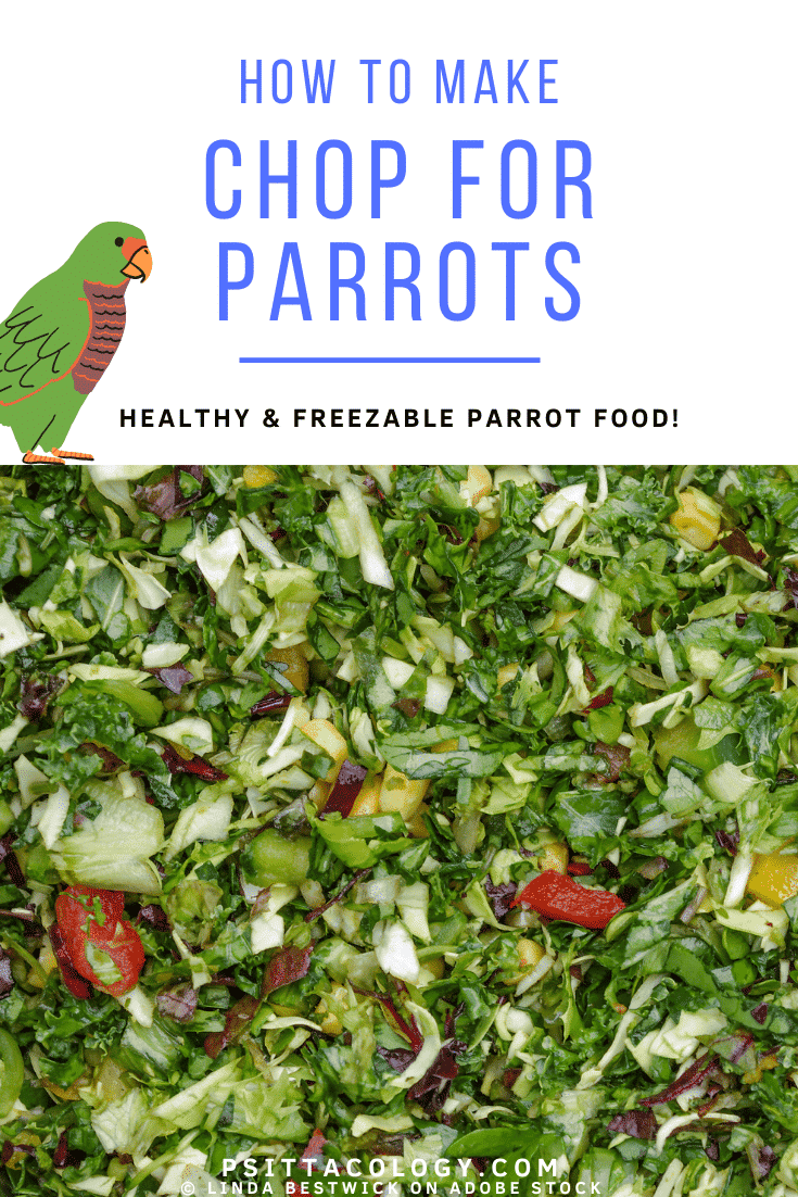 Chop (a mix of vegetables and other foods) for parrots.   What does a parrot eat?