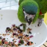 Macaw parrot feeding from a bowl of chopped foods.