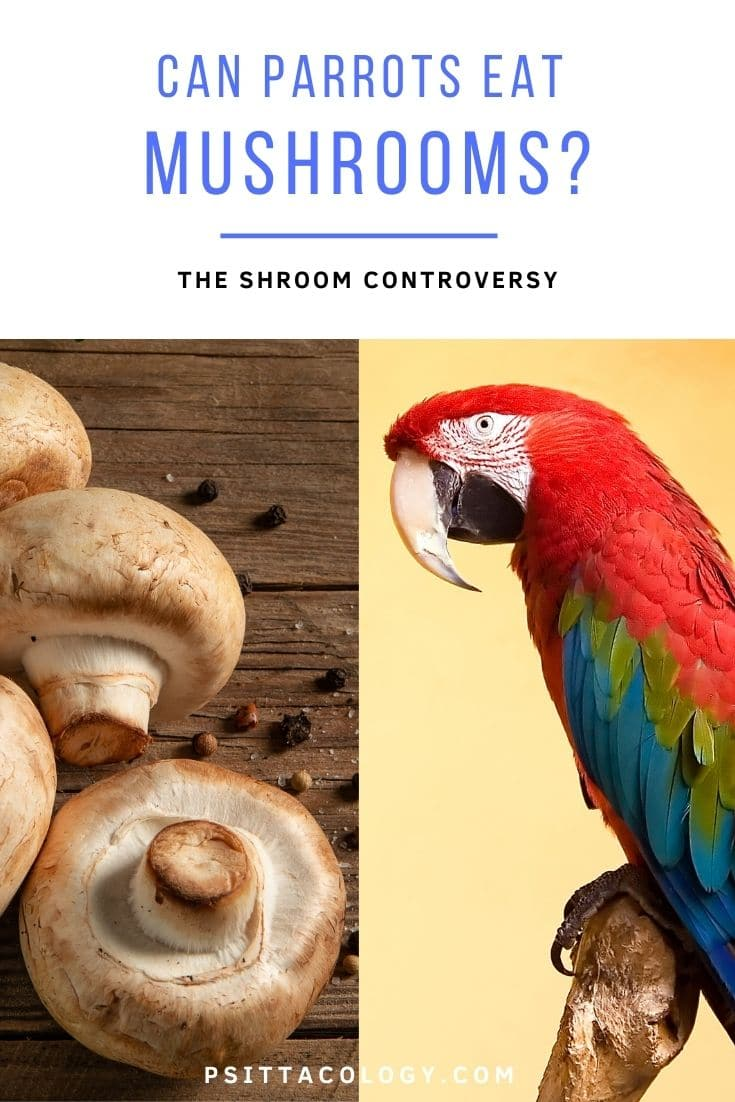 Photo of button mushrooms next to photo of macaw parrot | Can parrots eat mushrooms?