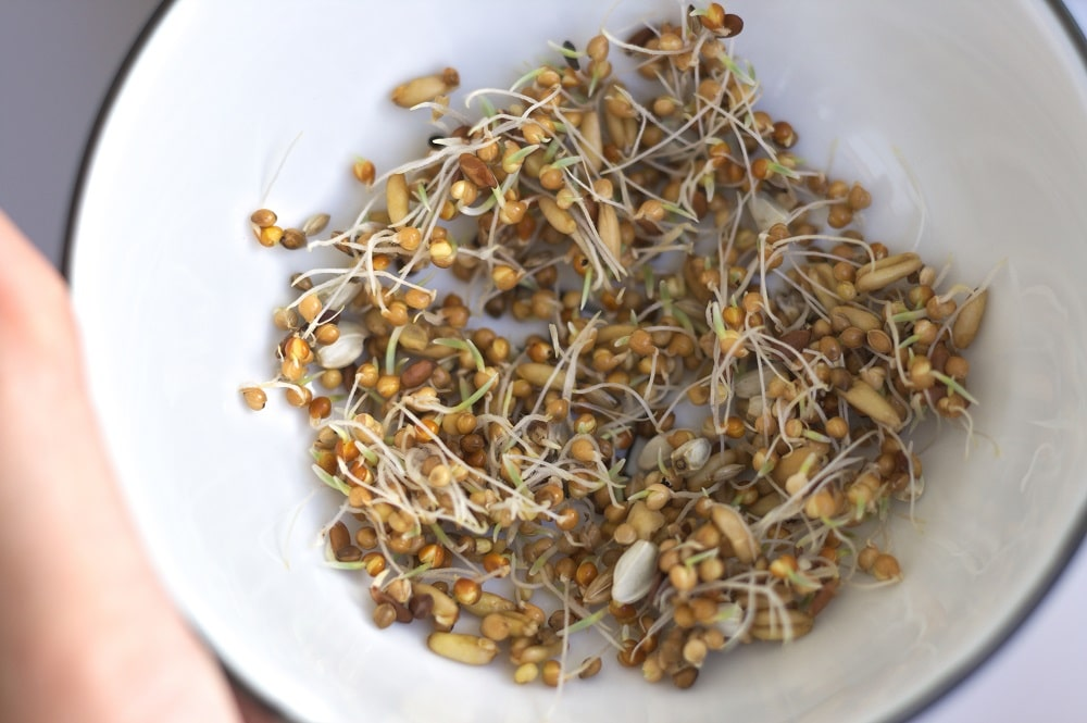 Sprouted parrot seed mix.
